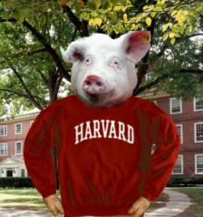 Can you be Harvard Educated and still think Swine Flu comes from eating pork?
